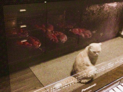 オーブン 猫
