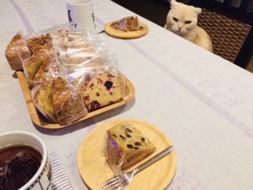猫とキャロットケーキ
