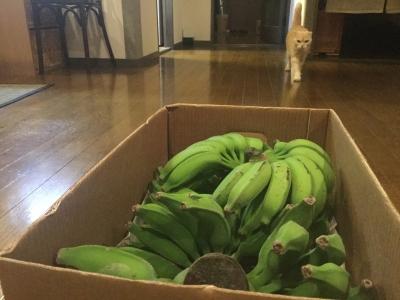 島バナナ1