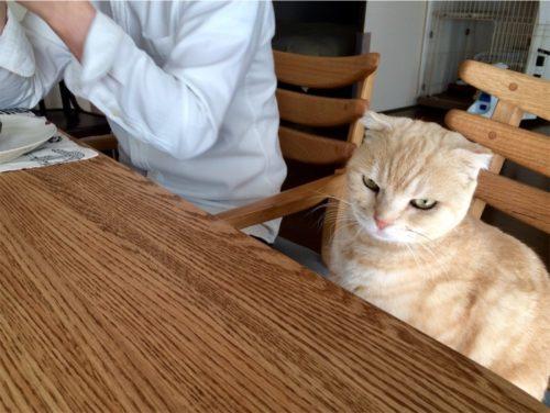 猫だからわかりません